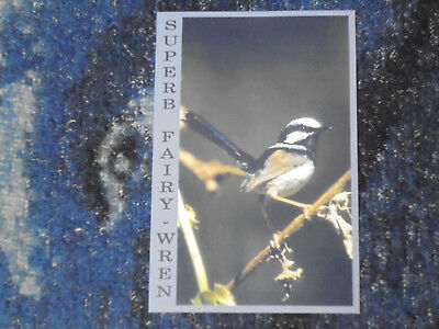 Australian Superb Fairy-wren Postcards - 1