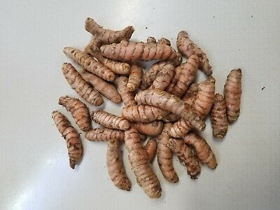 2 Pounds Fresh Tumeric Root To Eat Or Plant At A Great Discounted Price!