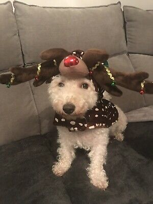 DOG REINDEER COSTUME / OUTFIT dress up