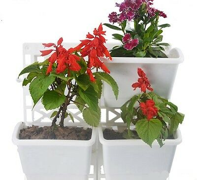 Display Living Wall Flower Fresh Herb Garden systemKit 2 Frames Set of 6 Pots