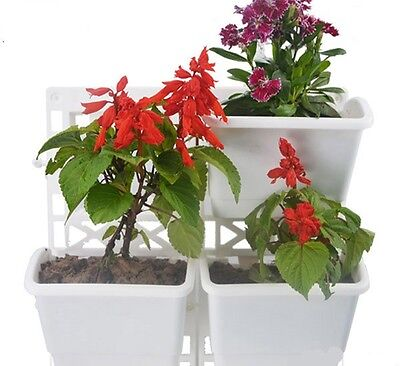 Display Living Wall Flower Fresh Herb Garden Growing with 1 Frame Set of 3 Pots