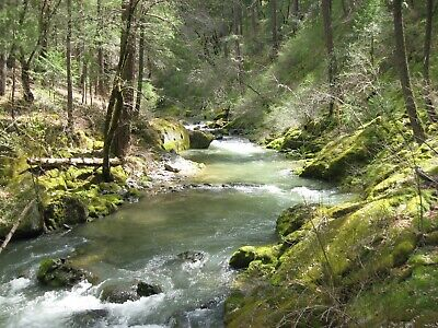 RARE 76.87 Acre Gold Mining Claim - Steephollow Creek - Nevada County, CA - NR