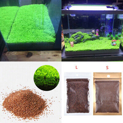 Aquarium Plant Seeds Aquatic Double Leaf Carpet Water Grass Fish Tank Decor Envy