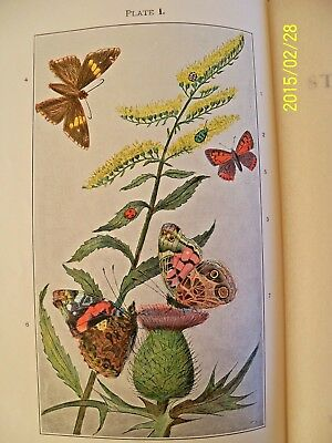 """Vintage 1931 """"MANUAL for the STUDY of INSECTS"""" by COMSTOCK & HERRICK,ILLUSTRATED"""