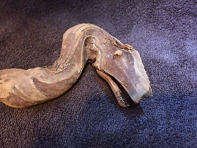 Piece of wood naturally looks like a snake or dragon - rare strange unique weird
