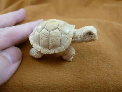 TURT-36) little white Tortoise Turtle shed ANTLER figurine Bali detailed carving