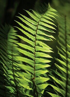 3 x Photographic Blank Greeting Cards /Notelet / Birthday Card /Note Card - Fern