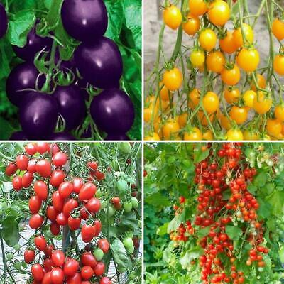 50pcs/Bag Colorful Cherry Tomato Seeds Vegetable Fruit Potted Seeds Home WST 01
