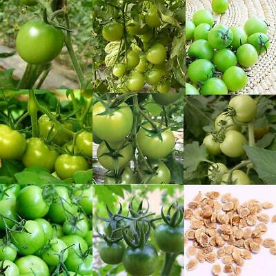 Perennial Green Tomato Seeds Fruit Seeds Vegetable Seeds Organic Plant WST 01