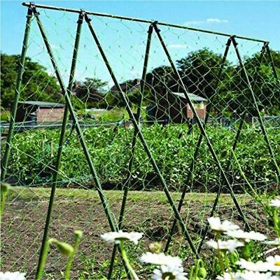 Pea And Bean Netting Garden Vegetable Patch Gardening Climbing Plants