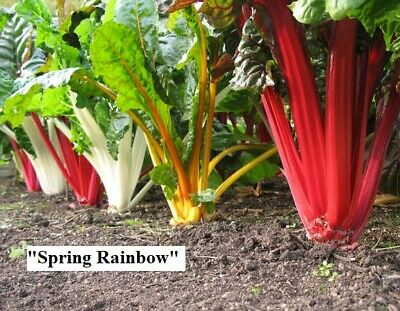 Vegetable seeds Swiss Chard. Red, White, Mix. Beet leaf.