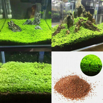 Aquarium plante aquatique Double battant eau plantes graines Fish Tank Decor