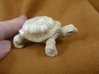 TURT-29) little white Tortoise Turtle shed ANTLER figurine Bali detailed carving