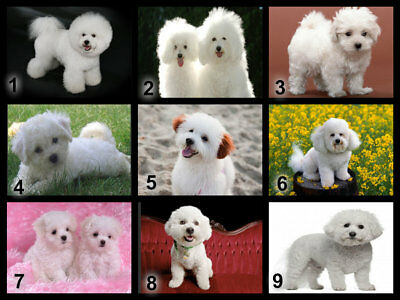2 sizes available Bichon Frise Dog Cupcake Cookie Biscuit Coffee Stencil