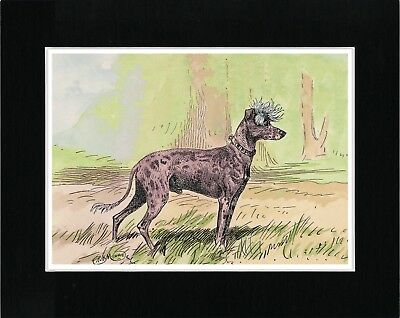 CAIRN TERRIER LADY AND HER DOGS LOVELY MOUNTED DOG PRINT READY TO FRAME