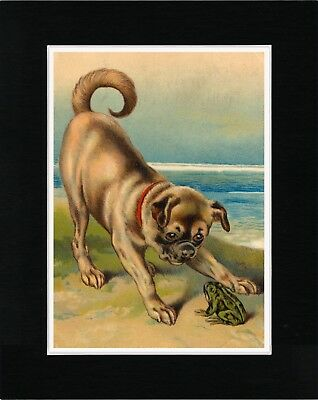 Cute Pug And Small Green Frog Lovely Old Style Dog Print Matted Ready To Frame