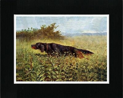 GORDON SETTER WITH DUCK GREAT VINTAGE STYLE DOG PRINT POSTER