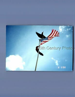Found Color Photo P+0411 View Of Birds On Pole,American Flag