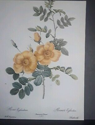 FLORAL ART PRINT White Flowers Charles Caryl Coleman 11x14 Haddads
