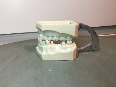 Vintage Columbia Dentaform Half Jaw Teeth Model