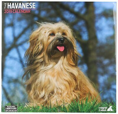 Havanese Traditional 2019 Calendar