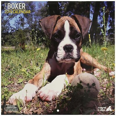 Boxer Traditional 2019 Calendar