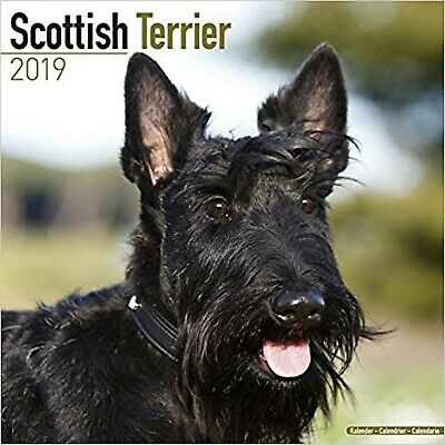 Scottish Terrier Calendar 2019 (Square)