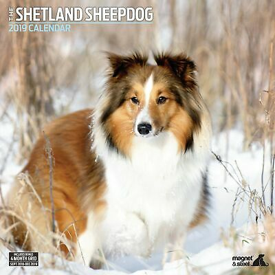Shetland Sheepdog Traditional 2019 Calendar
