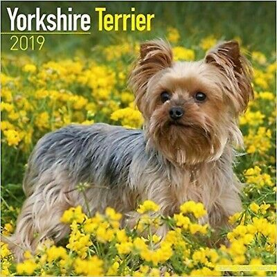 Yorkshire Terrier Calendar 2019 (Square)