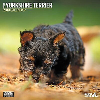 Yorkshire Terrier Traditional 2019 Calendar