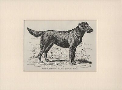 FLAT COATED RETRIEVER COUPLE AND THEIR DOG OLD STYLE PHOTO PRINT READY MOUNTED