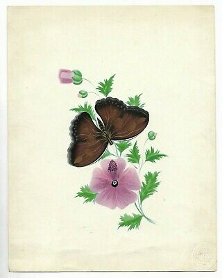 Antique 1800's NATURAL HISTORY Butterfly ORIGINAL WATERCOLOR PAINTING Entomology