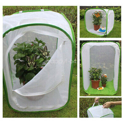 Giant Live Butterfly Garden Kit -Insect lore GROW insect Outdoor Toy Gift Kids