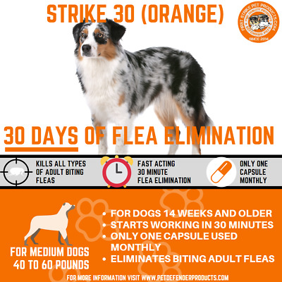 30 day Flea Killer for medium sized dogs, 3 capsule pack 40 to 60 pounds