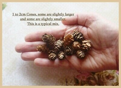 1cm to 2cm MINI Natural Pine Cones - 40 in total, UK Seller & 1st Class Postage