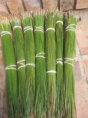 alabama longleaf pine needles 2lbs green 15 to 16""