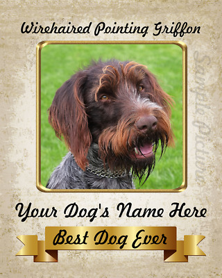 WIREHAIRED POINTING GRIFFON challenger jacket ANY COLOR