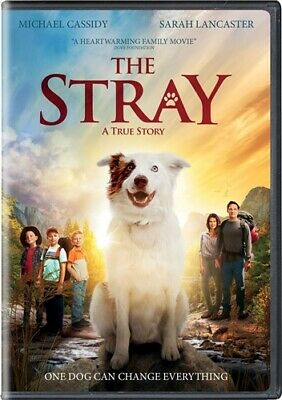 THE STRAY New Sealed DVD