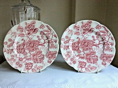 Antiguos Platos Grandes De Porcelana Inglesa En Rosa - English Chippendale