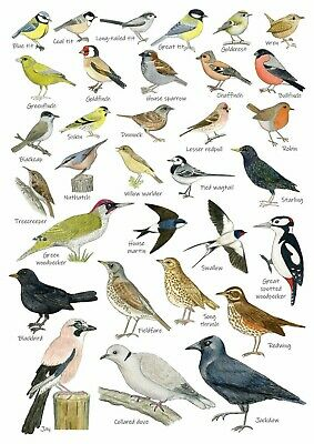 British Garden Birds Identification Chart Wildlife POSTER A4 A3 A2 BUY2GET1FREE