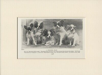 PAPILLON NAMED DOGS OLD VINTAGE 1930's DOG PRINT READY MOUNTED