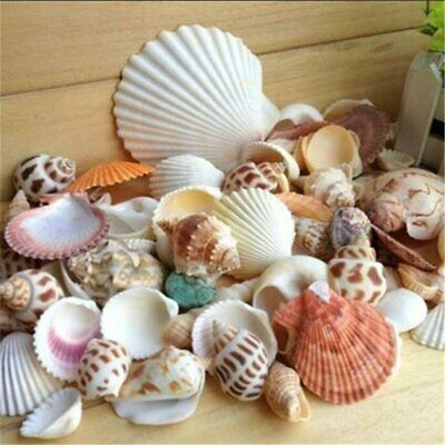 Mixed Sea Beach Shells Crafts Seashells Aquarium Decor Photo Props Beach Theme