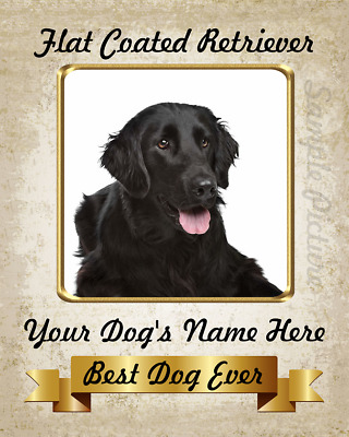 Flat Coated Retriever Personalized Home Decor Custom 8X10 Photo Picture