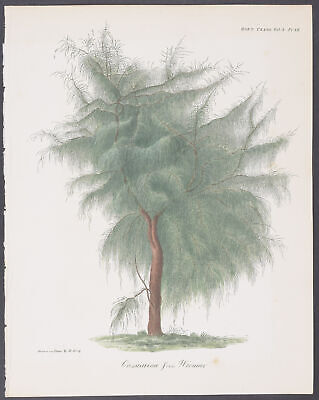 Horticultural Society - Pine Tree. 3-12 - 1812-1835 Transactions... of London