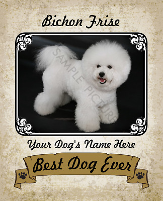 BICHON FRISE PROPERTY Laws Magnet Personalized With Your