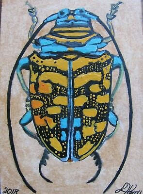 "A623  Original Acrylic Aceo Painting By Ljh  ""Beetle"""