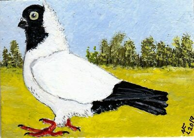 """ACEO Original """"Nun pigeon breed"""" by artistnelson"""