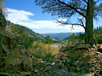 Easily Accessible 40-acre Northern Colorado Rich Lode & Placer Gold Mine Claims