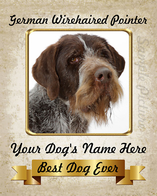 German Wirehaired Pointer Dog Personalized Printed 8X10 Photo Picture Art