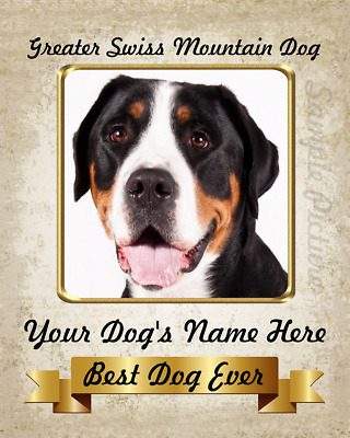 Greater Swiss Mountain Dog Personalized Name Printed 8X10 Photo Picture
